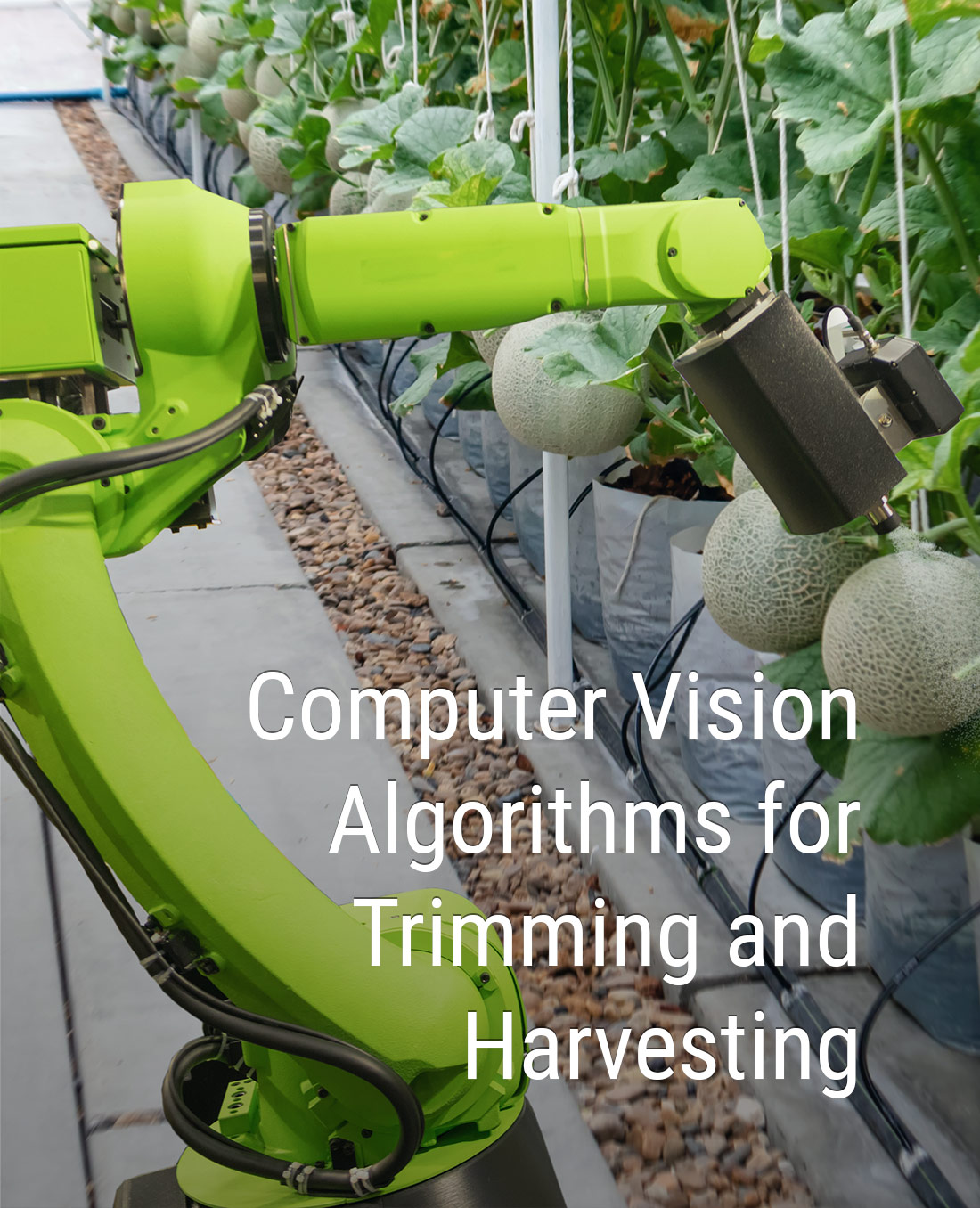 Computer Vision Algorithms for Trimming and Harvesting